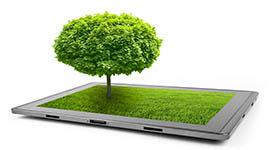 Arborist Reports & Consulting Services in Toronto