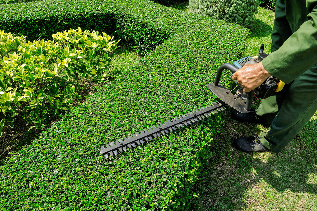 Hedge trimming and shearing in toronto elite tree care for Best garden maintenance