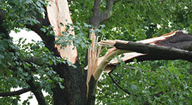 Tree Risk Assessments in Toronto