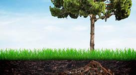 Fertilizing Trees and Shrubs in Toronto