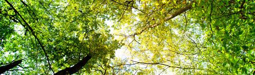 Tree and Shrub Pruning in Toronto