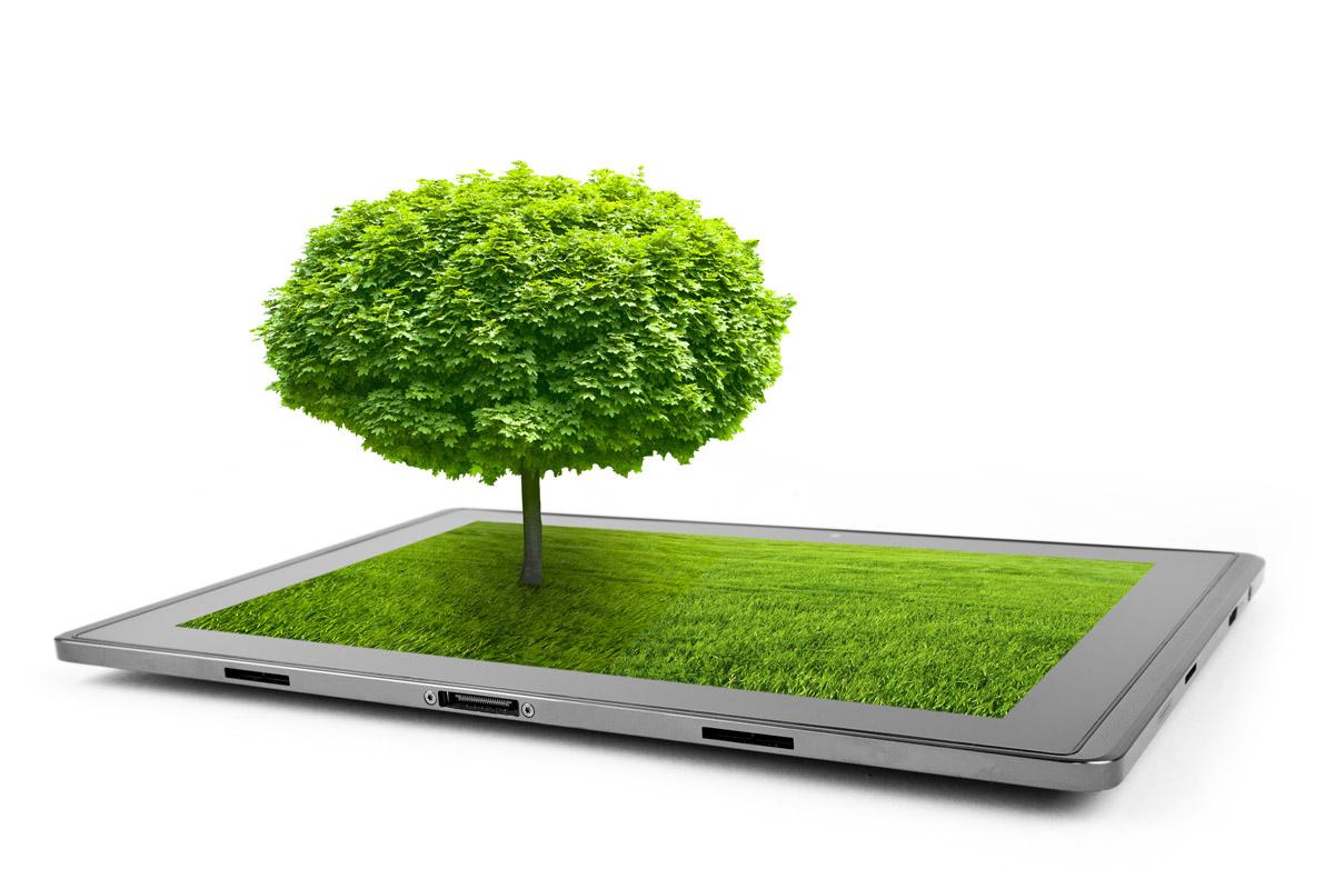 Arborist Reports & Consulting in Toronto