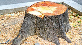 Tree Stump Grinding and Removal in Toronto