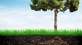 Fertilizing Trees and Shrubs in Toronto