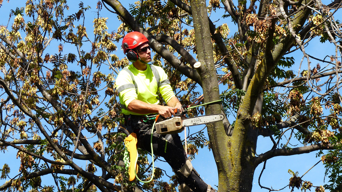 Tree and Shrub Removal in Toronto